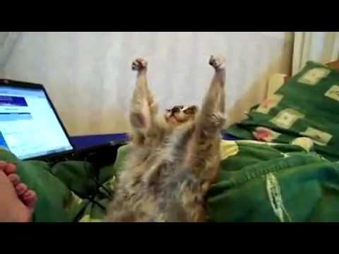 Lemur wird unter den Armen gekrault